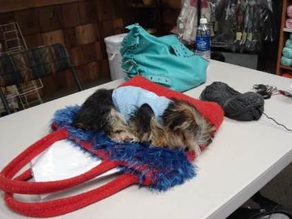 Sofi sleeping at knittingclass