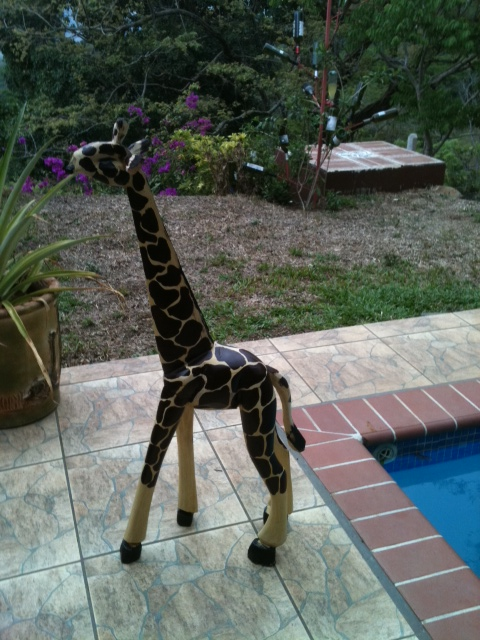 Mollie the giraffe